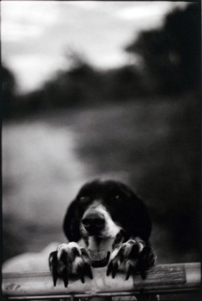 Ginger, 2004