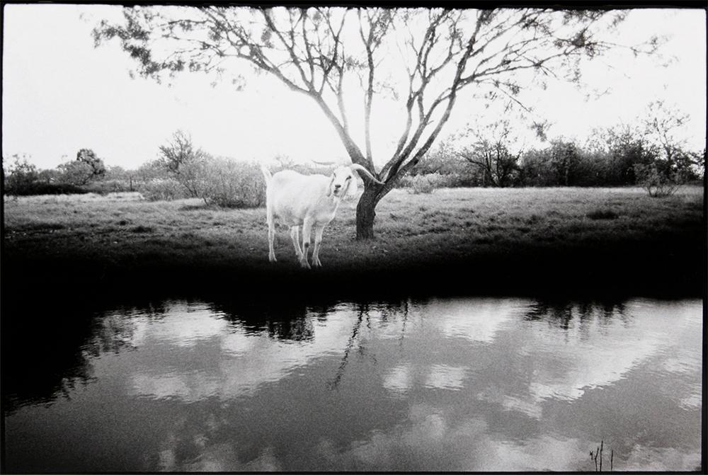 Celestial Waters, 2012
